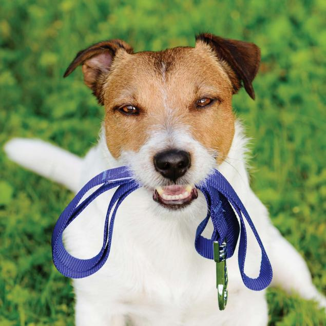 Dog Accessories available in the Woolacombe Sands Holiday Park shop