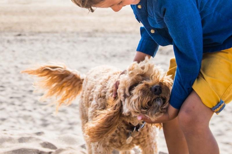 Dog Friendly Holidays Woolacombe Holiday Park Devon